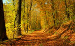 Autumn Wallpaper II