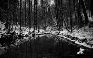 Winter Wallpaper II by SvenMueller