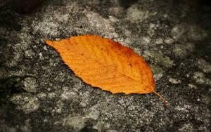 Fallen Leaf Wallpaper by SvenMueller