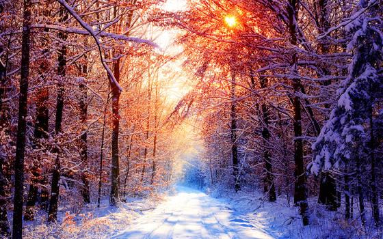 Winter Wallpaper III