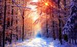 Winter Wallpaper III by SvenMueller