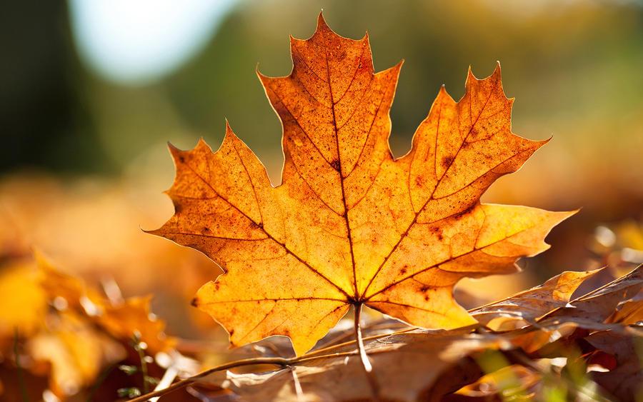 Autumn Leaf Wallpaper by SvenMueller