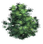 anime type Tree(leaves) brush XD by xong