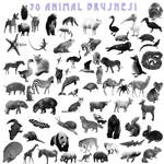 A-Z Animal Brushes