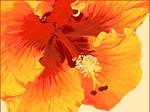 hibiscus II