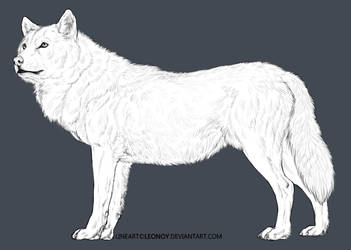 FREE Wolf Lineart- NEW by LeoNoy