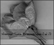 Rose Brushes Set 3 of 3 by nitrate