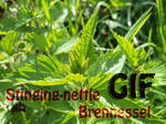Brennessel - nettle GIF by SusuSketches