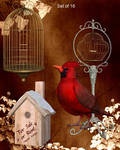 Bird Things