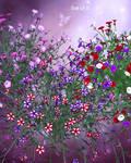 Fairy Petunias