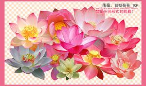 10 lotus png