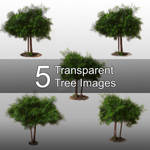5 Transparent Tree Images