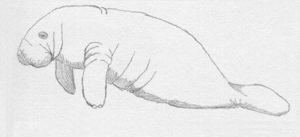 morphivore