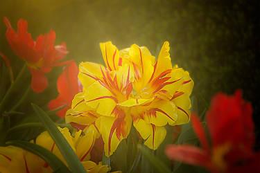 SunLit Petals