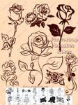 brushes Roses