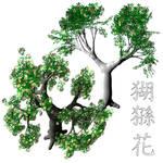 Bloom Baobab Adansonia PSD