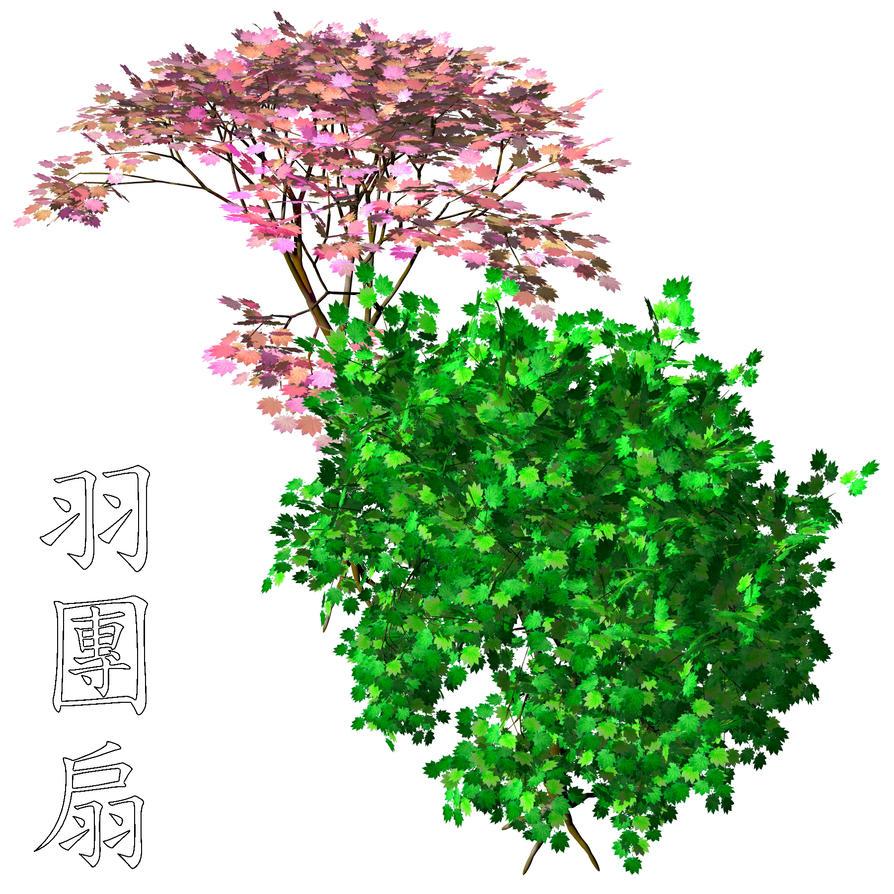 Hauchiwa Acer Japonicum PSD by Kanji-Hanzi-centerrr