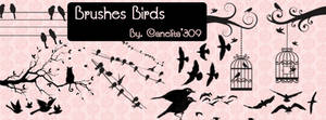 Brushes Birds By Canelita309