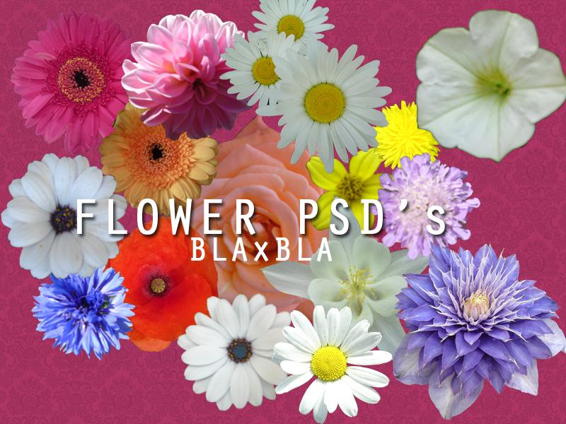 Flower PSD's by BLAxBLA