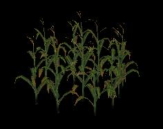 Corn Mesh for FeralHeart by giddyfox