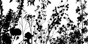 Ewanism: Floral Brushes