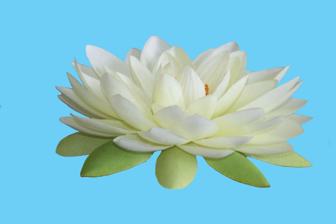 Lotus Pdf Zip File By Mandykat On Deviantart