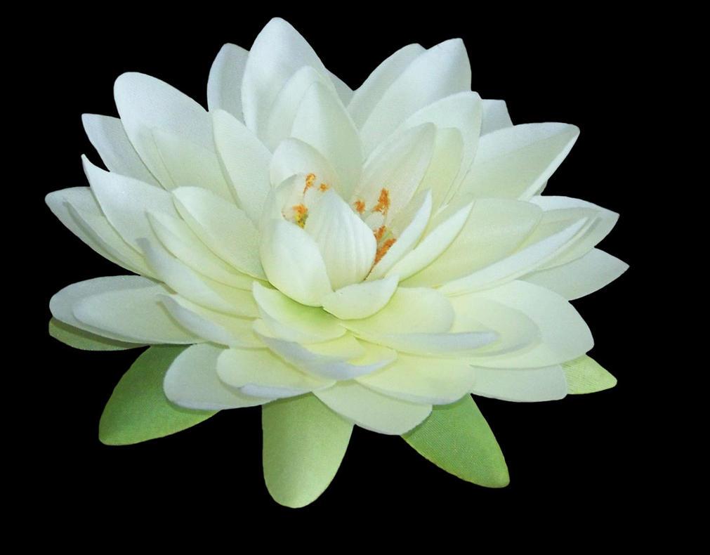 Lotus Pdf Zipped File 2 By Mandykat On Deviantart