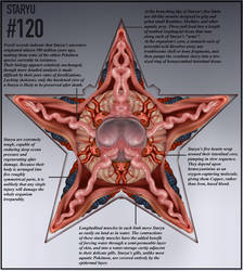 Staryu Anatomy Gif by Christopher-Stoll