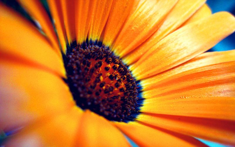 .sun by orbatid