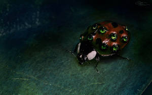 Ladybug wallpaper dark version by DianePhotos