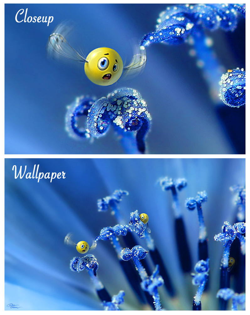 Wild Smilies Wallpaper by DianePhotos