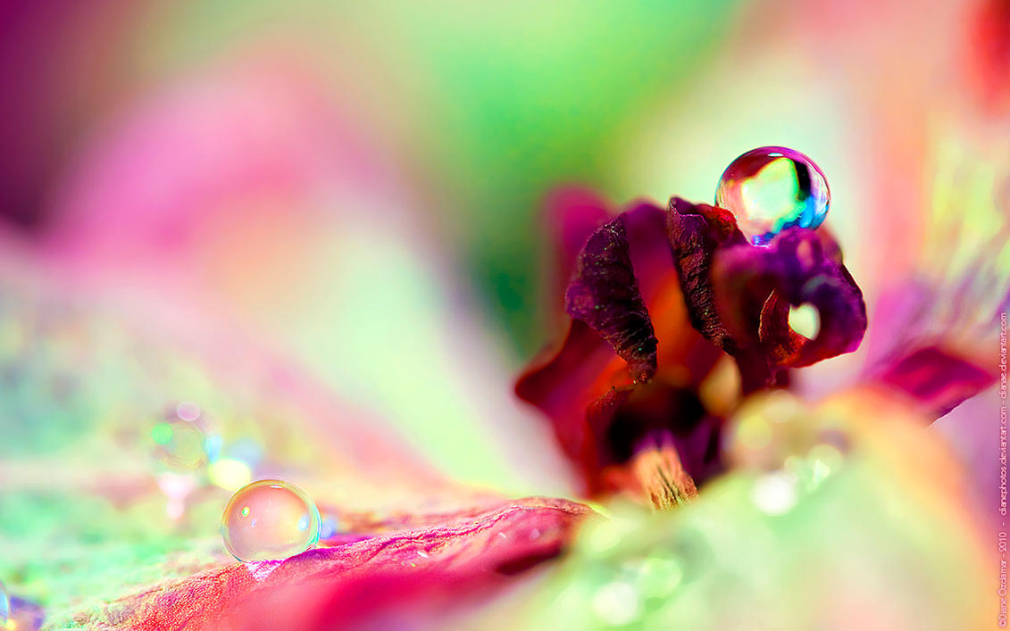 Spring Wallpaper by DianePhotos