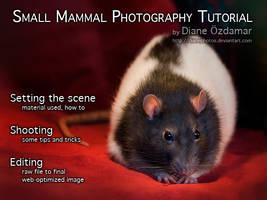 Small mammals photo tutorial