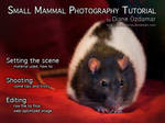 Small mammals photo tutorial by DianePhotos