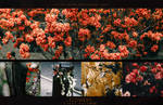 Flowers ( Stock Pack )