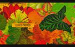 Leaves Pngpack #40