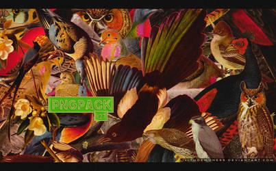 Png Birds #27
