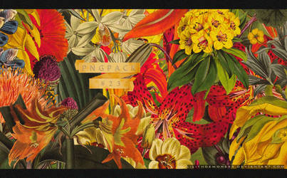 Botanic Illustrations Pngs