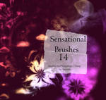 Sensational Brushes