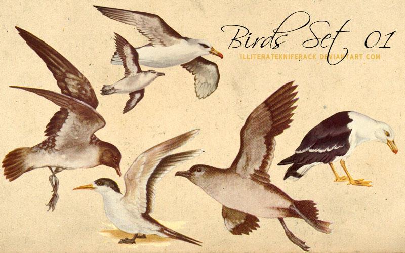 Birds Scans Set 01 by illiteratekniferack