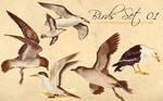 Birds Scans Set 01