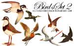 Birds Scans Set 02