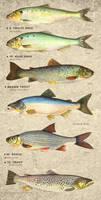 Fish Stock 01