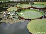 LilyPond Pack Delightfulstock