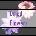 .::+Dried Flower Brushes+::. by Rogue-Stock