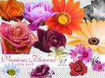 PNG pack - Various Flowers