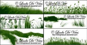 The Grasslands II