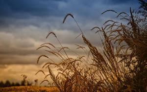 Prairie Grass by midnightstouch