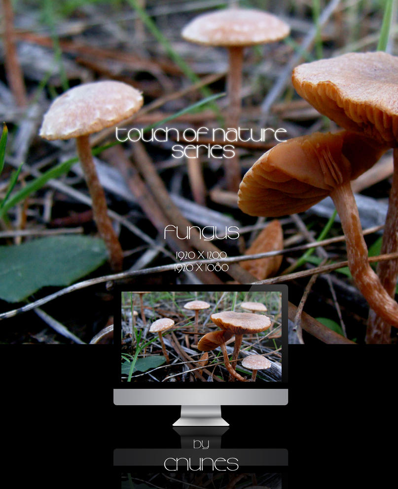 Touch of Nature Series - Fungus by CNunes