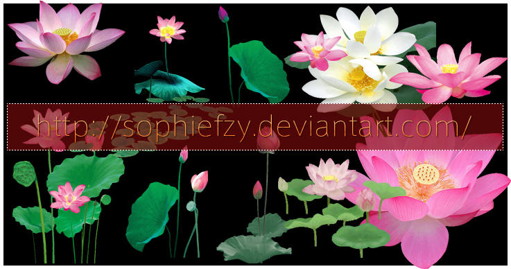 PNG lotus stock by Sophie-Y
